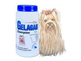 Gelacan Champion Color - Orling - 500 g